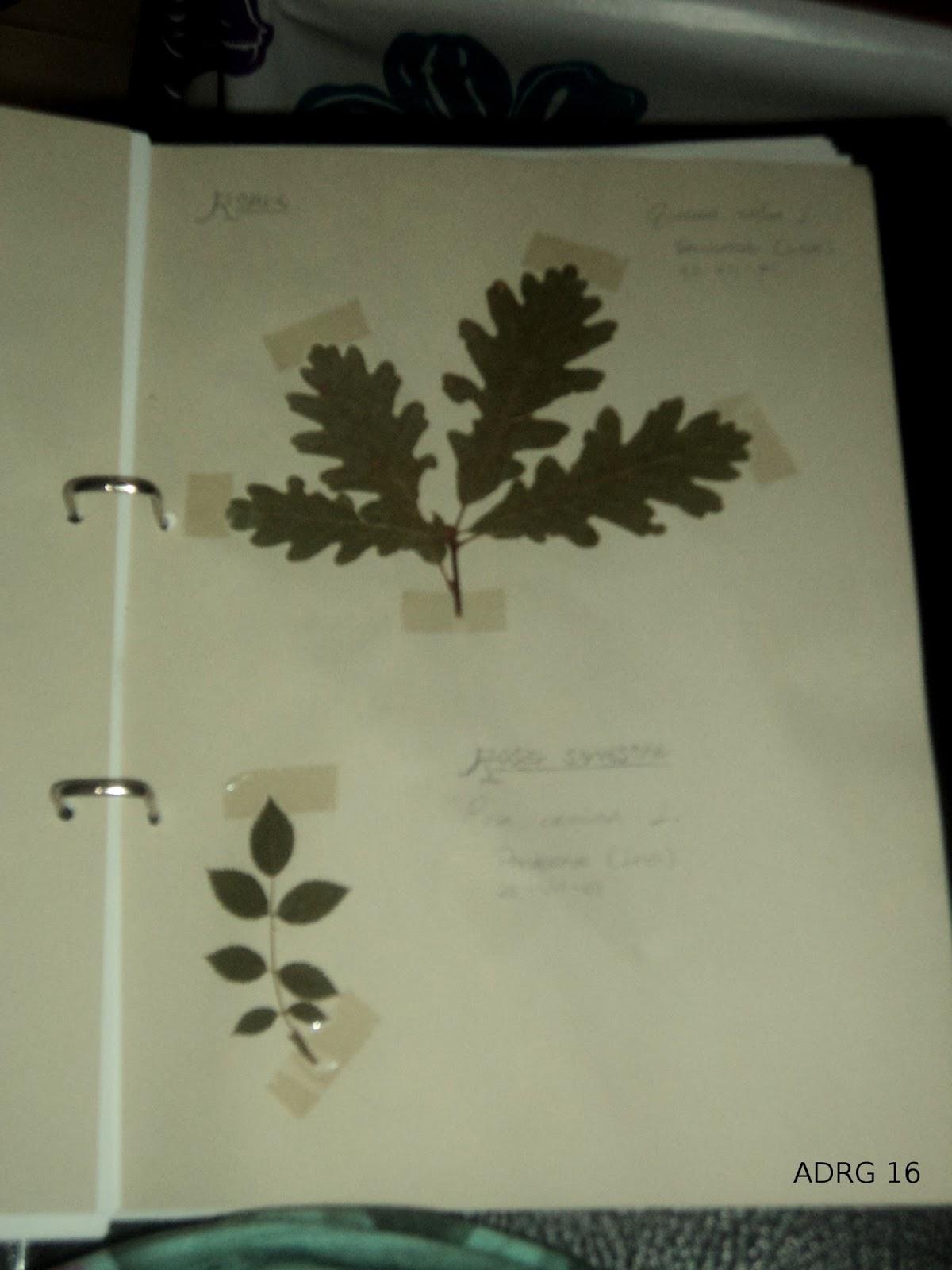 Un ambientalista c mo hacer un herbario - Plantas para hacer setos ...