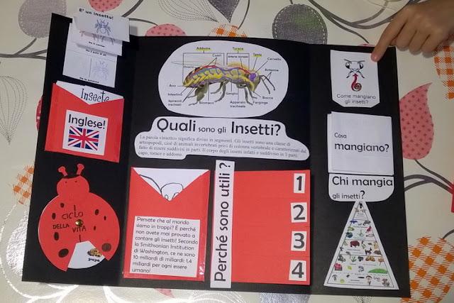 studiare gli insetti bambini