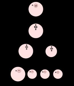 etapas de la meiosis yahoo dating