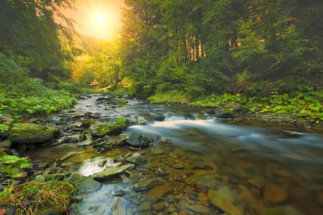 Manantial, reflejo de la naturaleza pura y de la esencia de la tierra.