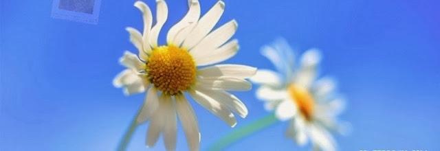 Beautiful flower Facebook cover