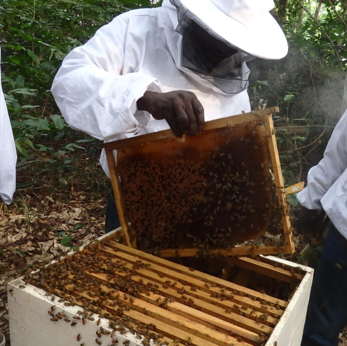 apiculture en afrique