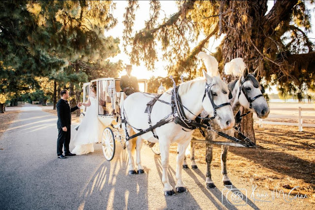 Wedding Horse Hire Perth