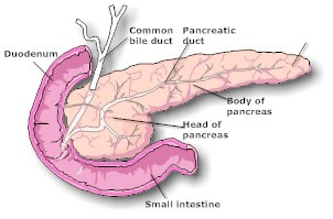 Pancreas: The production factory of Insulin