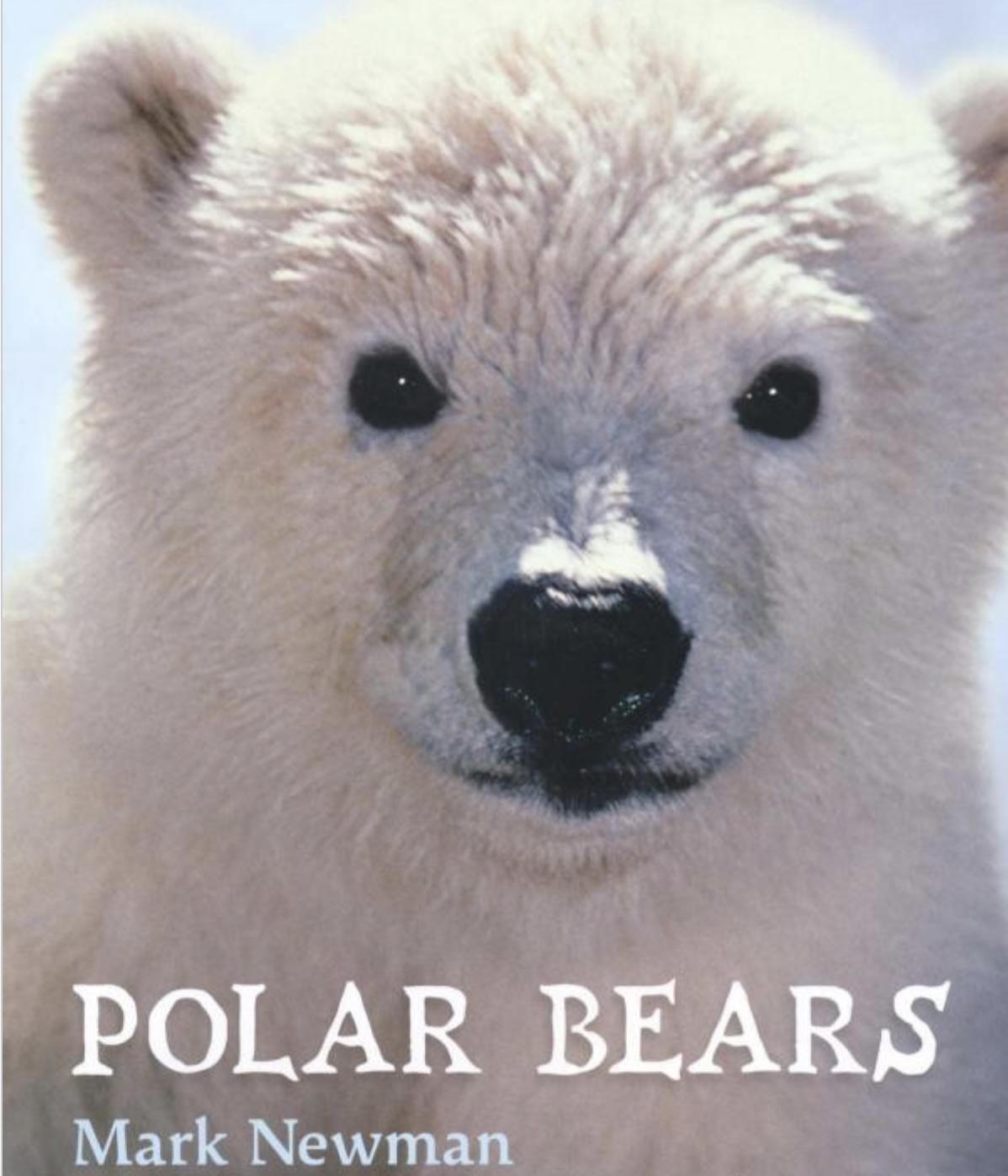 Screen%2BShot%2B2018 02 02%2Bat%2B3.37.21%2BPM learning lessons with amy labrasciano polar bears ela lesson