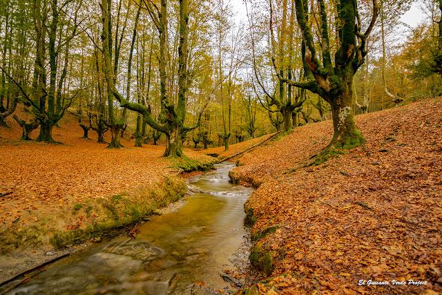 Parque Natural del Gorbea - Hayedo de Otzarreta por El Guisante Verde Project
