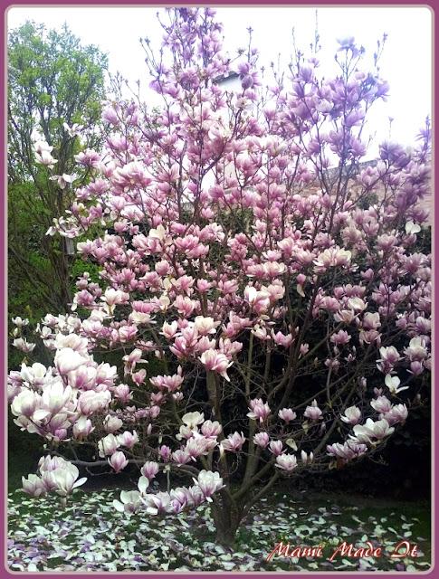 Prachtvolle Magnolie - magnificent magnolia