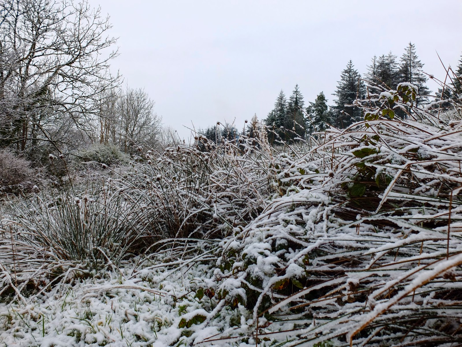 Snow capped vegetation on a hillside in North-West County Cork.