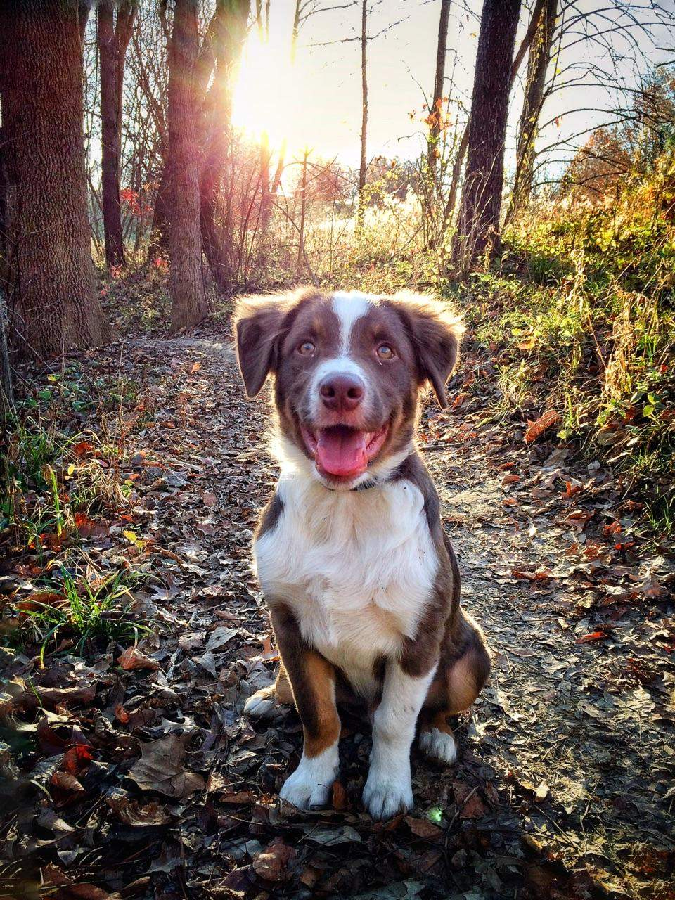 Cute dogs - part 159, cute dog photos, best dog images