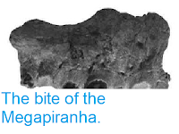 https://sciencythoughts.blogspot.com/2013/06/the-bite-of-megapiranha.html
