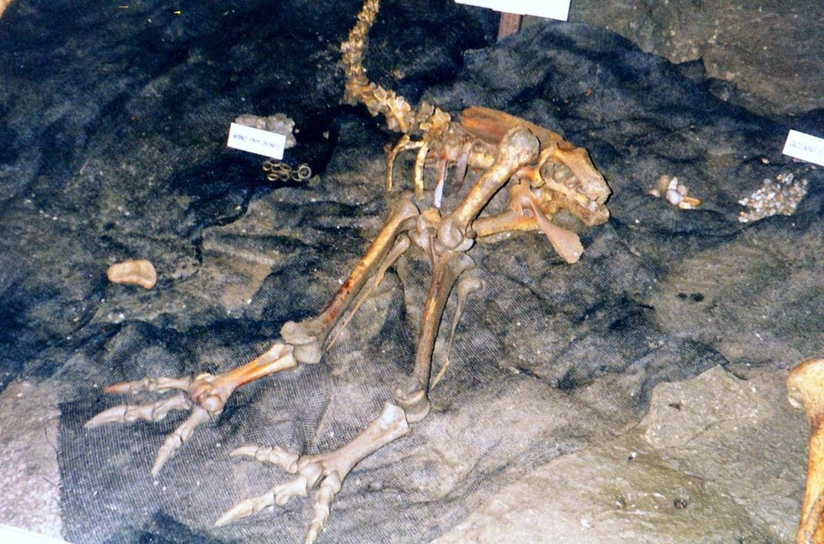 The Results Were Astounding The Mysterious Claw Was Found To Be The  Year Old Mummified Remains Of An Upland Moa