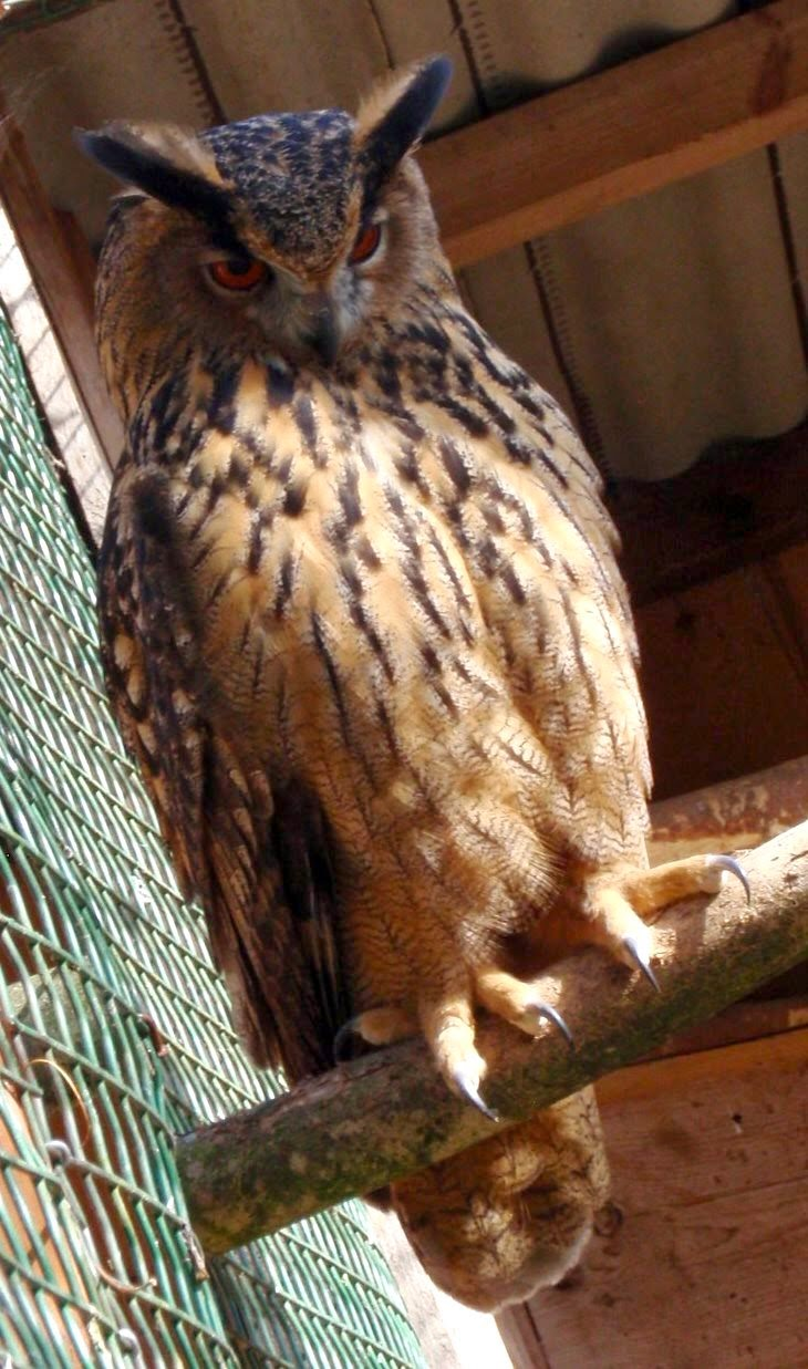 Rock and Owl Blog: Wild thing - you make my purse swing!