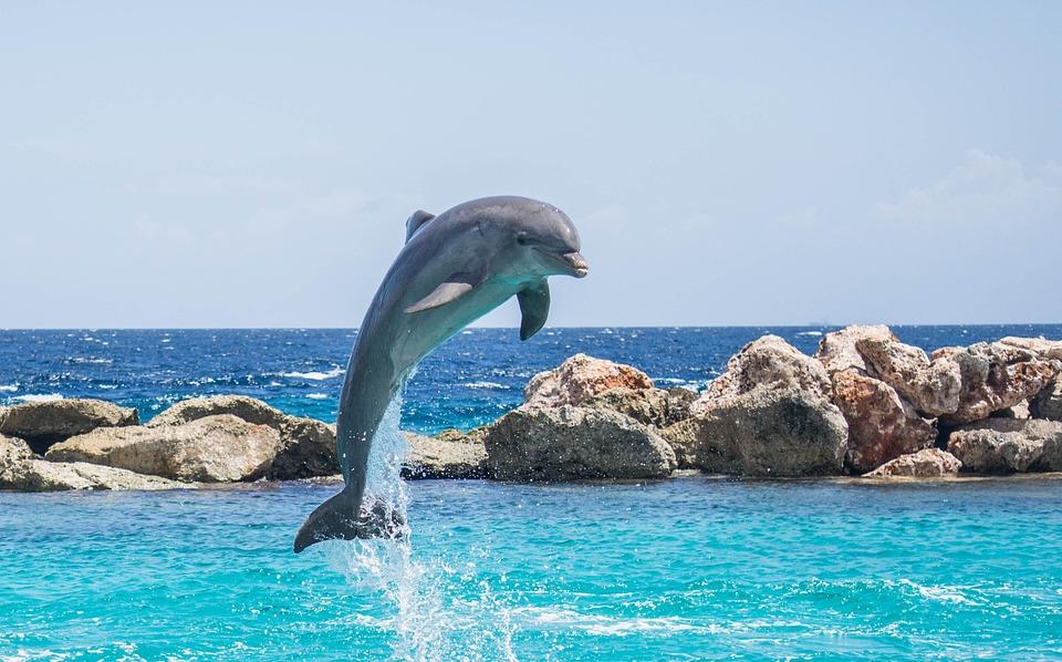 Versemovie Wiersze Filmowe Muzyka Człowiek I Delfin