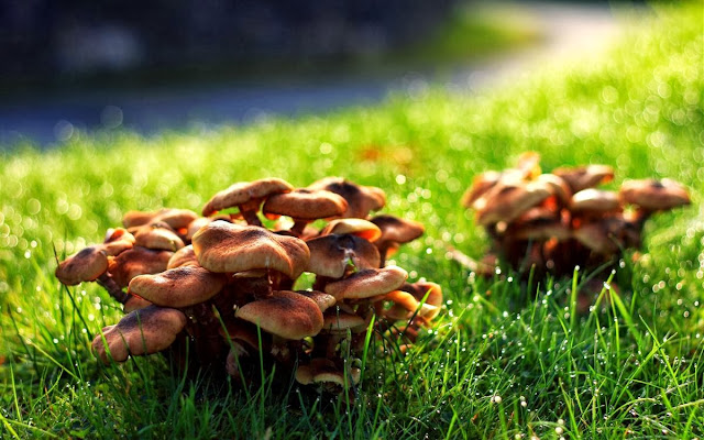 big bunch of mushrooms in the grass, raindrops