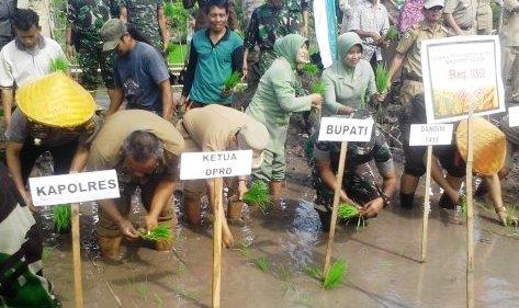 Pemerintah, Dan, Petani ,Selayar ,Ikut Tanam Serentak 1000 Titik Se-Sulsel