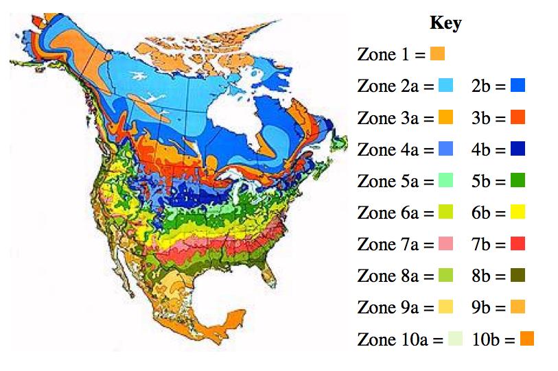 Map Of Growing Zones In Us Globalinterco - Map of us planting zones