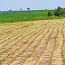 Por que cuidar da instalação da lavoura de soja