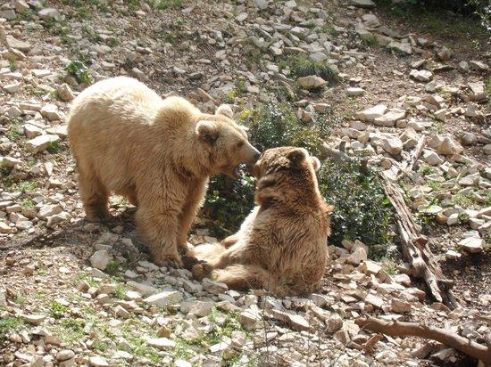 Osos en los extremos, 2004 un año clave:los casos de investigación con los osos en Siria y en la Argentina.