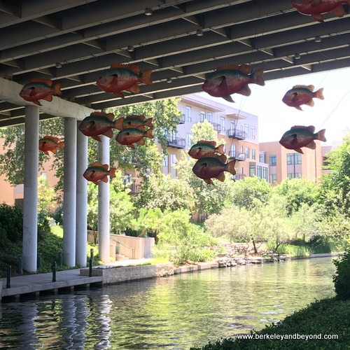 hanging school of fish on the River Walk near the San Antonio Museum of Art in San Antonio, Texas
