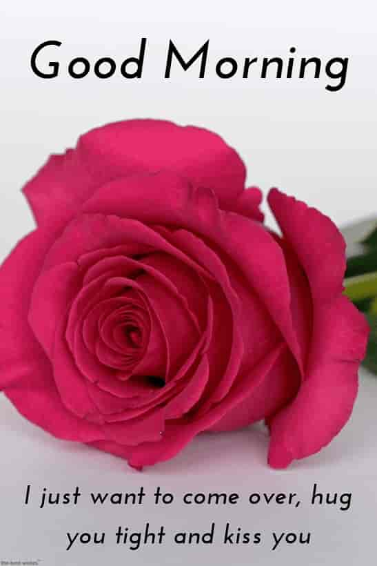 good morning romantic msg for him with hd rose