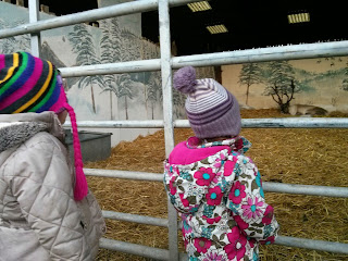 reindeer watching