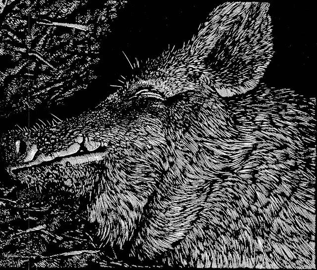 Barry Moser, boar head profile
