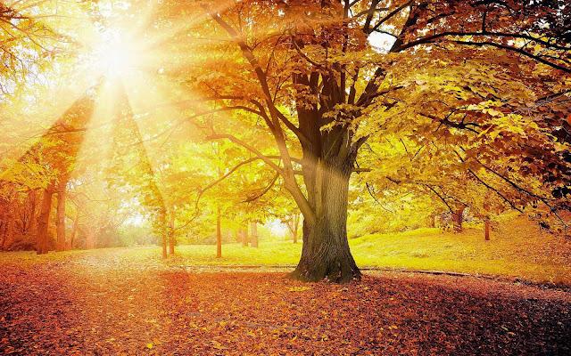 Foto boom met herfstbladeren en zonlicht in de herfst