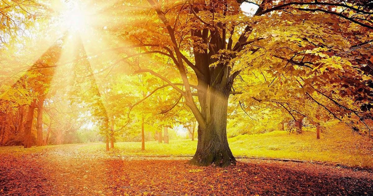 boom met herfstbladeren en zonlicht