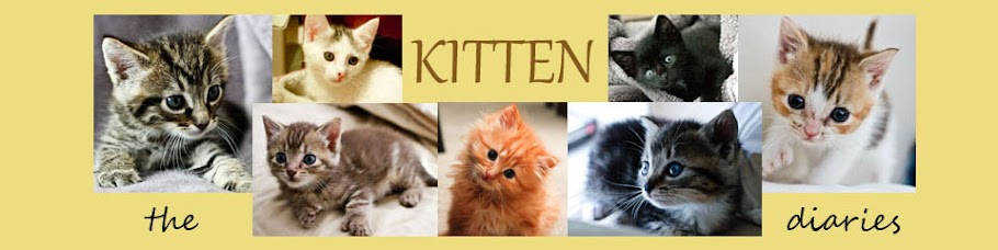 the kitten diaries