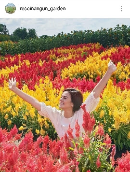 taman bunga celosia jogjakarta