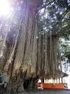 Misteri Makam Loang Baloq Di Pulau Lombok