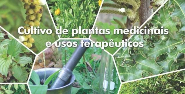 Resultado de imagem para colheita de plantas medicinais