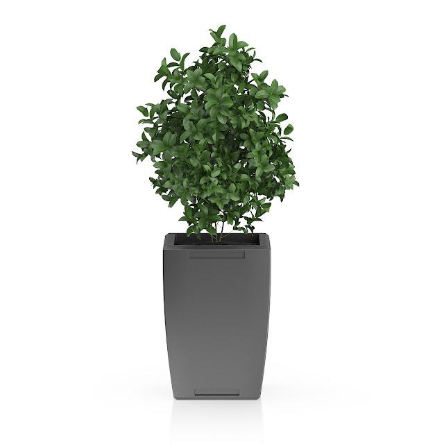 3D model free -  Plants_25