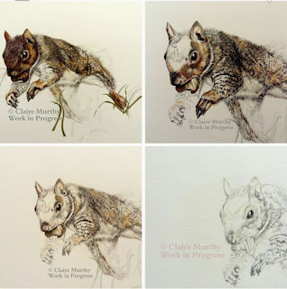 detailed study of a squirrel painting wildlife