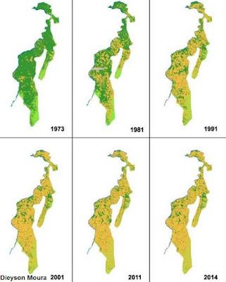 Amazônia tocantinense, desmatamento, perda de biodiversidade na amazônia tocantinense, 59 aves ameaçadas na amazônia tocantinense, aves ameaçadas no Tocantins, Tocantins, birds, extinção, aves extintas, fotos de aves em extinção