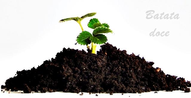 Carencias nutricionais das plantas