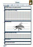 https://www.legakulie-onlineshop.de/Biene-Biologie-Schularbeit-Klassenarbeit-Lernzielkontrolle