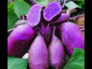 The Latest Of 13+ Benefits Of Eatting Purple Sweet Potato for Body Health - Healthy T1ps