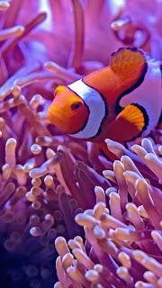 Fish Mobile HD Wallpaper