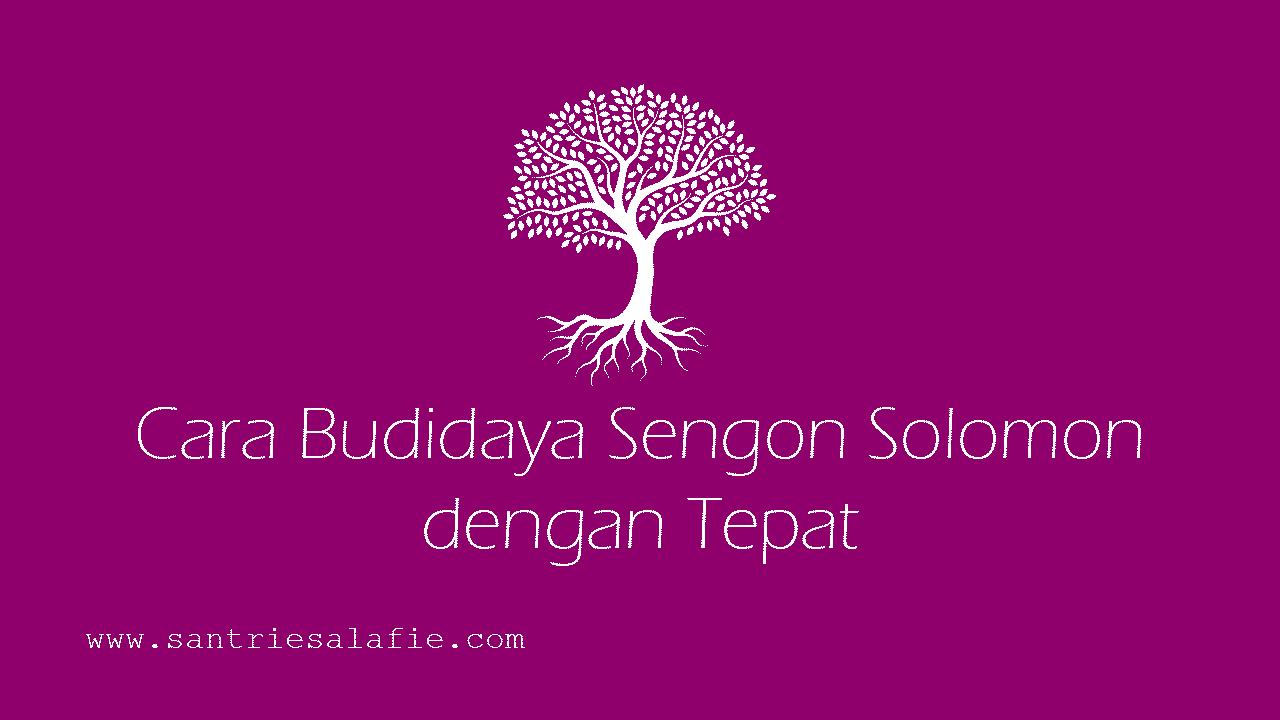 Cara Budidaya Sengon Solomon dengan Tepat by Santrie Salafie