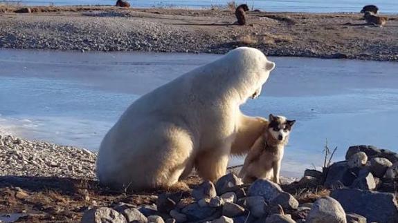 El vídeo de un oso polar acariciando a un perro que esconde una tragedia