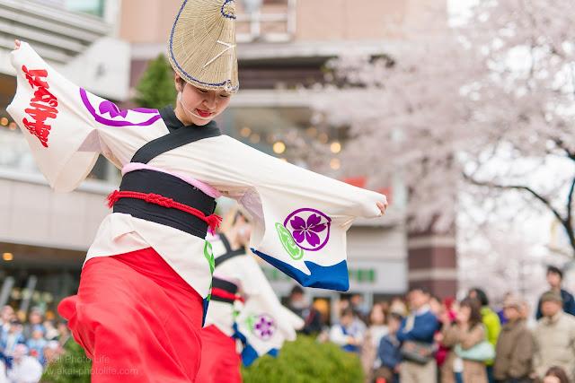 阿波踊りの本場徳島の阿呆連と姉妹連、江戸っ子連の女性の奴踊り