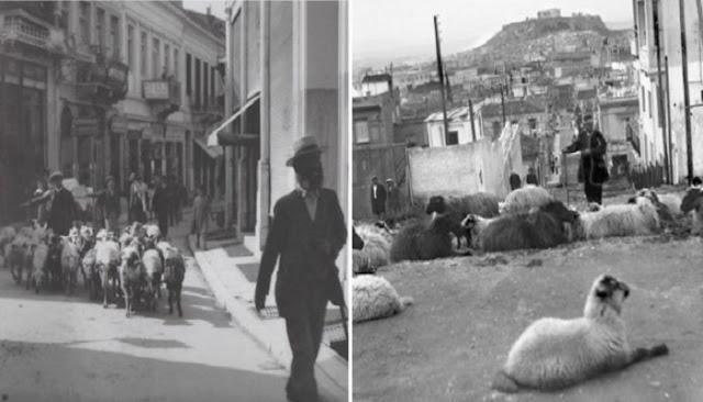 Όταν στο Κολωνάκι έβοσκαν πρόβατα