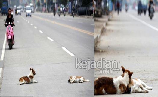 Kesetiaan Anjing 13 Kisah Kesetiaan Anjing yang Dijamin Bikin Nangis