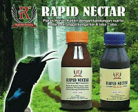 Vitamin Burung Rapid Nectar Black