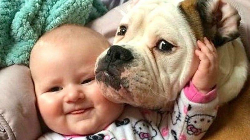 Μωράκια ξεκαρδίζονται στα γέλια όταν παίζουν με τα σκυλιά (βίντεο)