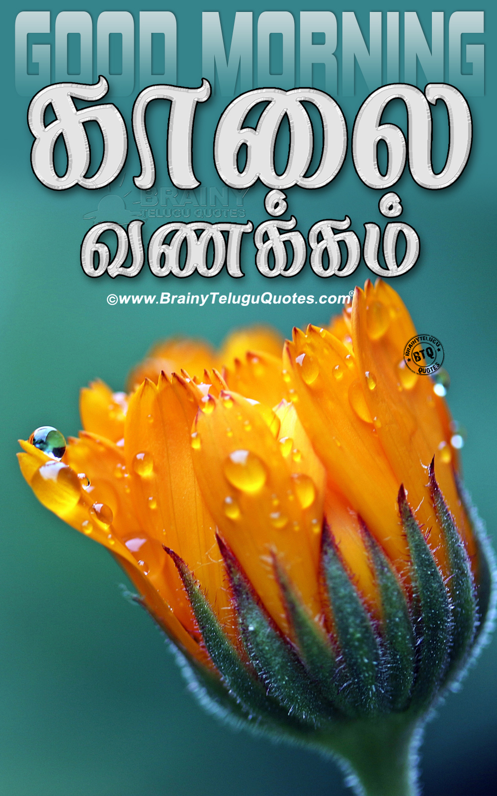 Good Morning Quotes In Tamil With Images Download The Christmas Tree