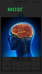 460 слов 4 мозг человека схематически 21 уровень