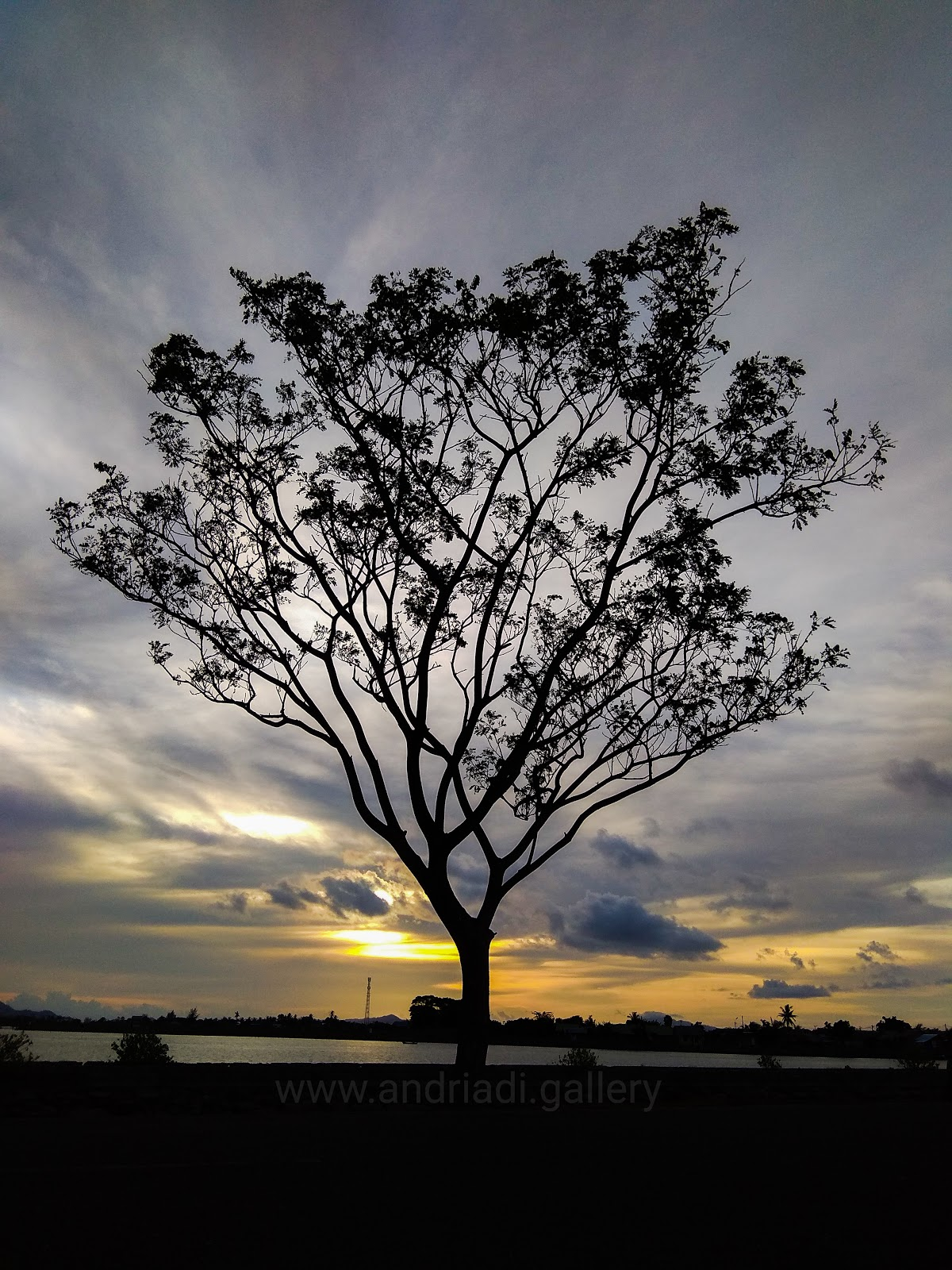Tree with sunset background | Potrait Wallpapers HD