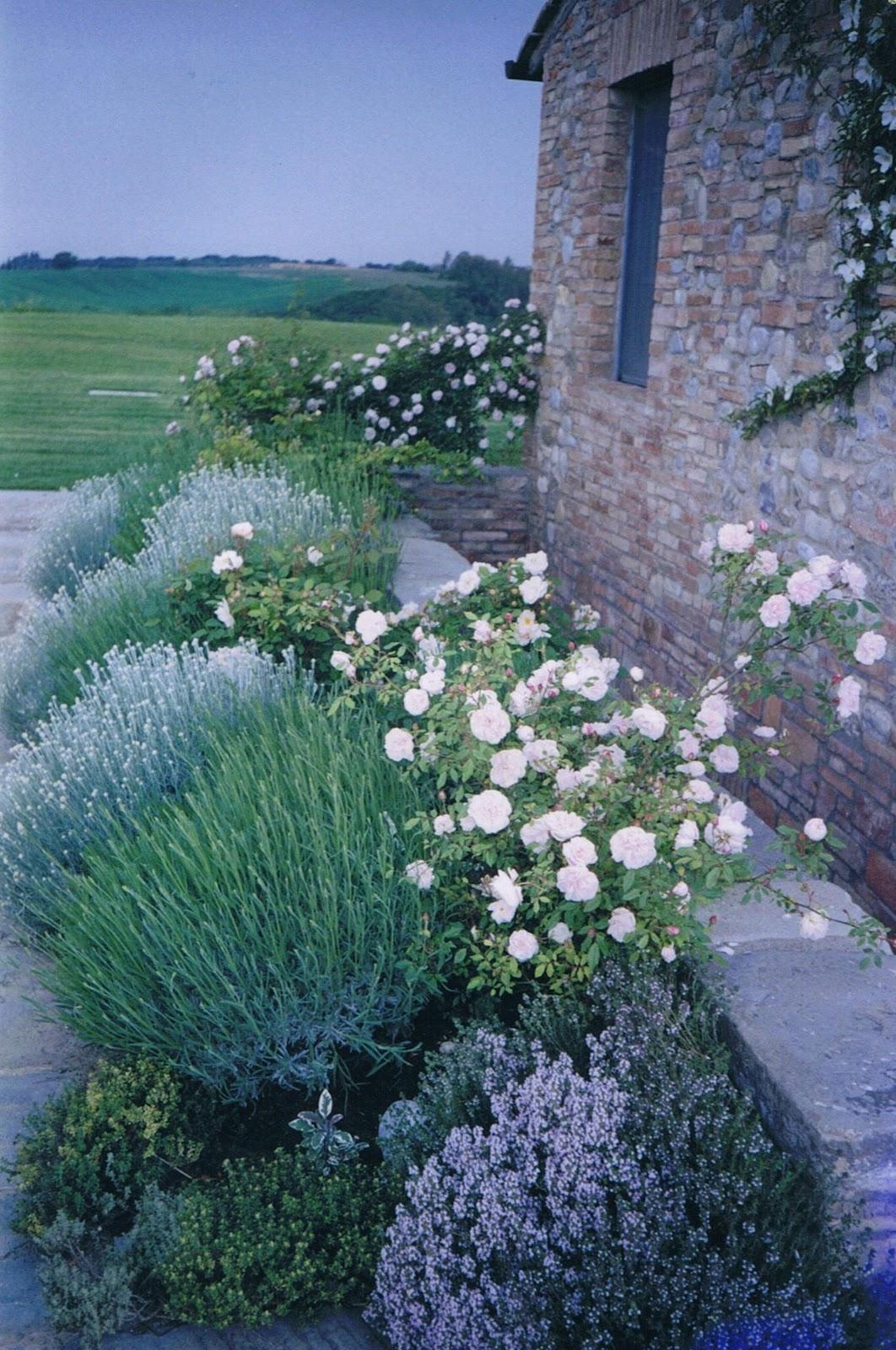 Roses In Garden: Bella Terra : Informal Tuscan Garden